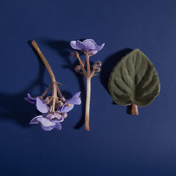 moon-flower-leaves